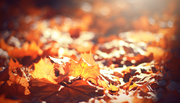 Mild temperatures will be a prelude to a cold rain for the weekend before Thanksgiving.